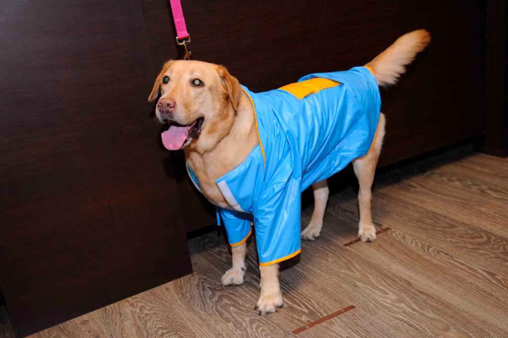 Dog in sonya raincoat
