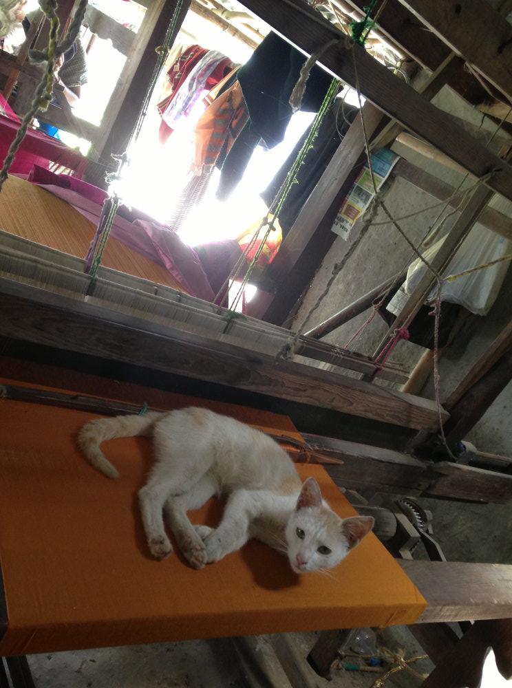 Oops ! Did I oversleep .. On the looms in Imphal - krishna mehta